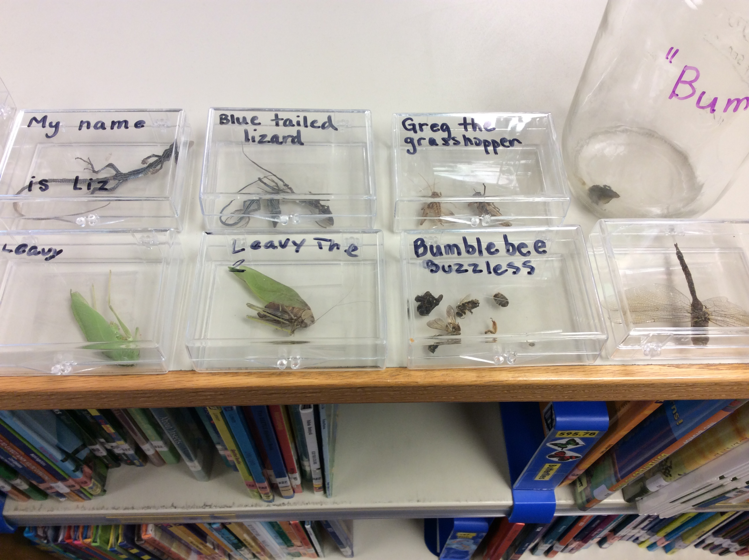 Come see our insect collection! They mark the non-fiction insect section for us!